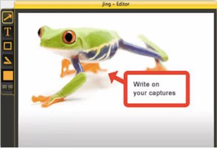 jing frog